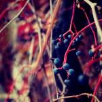 Zarabianie na blogu: podsumowanie listopada 2013