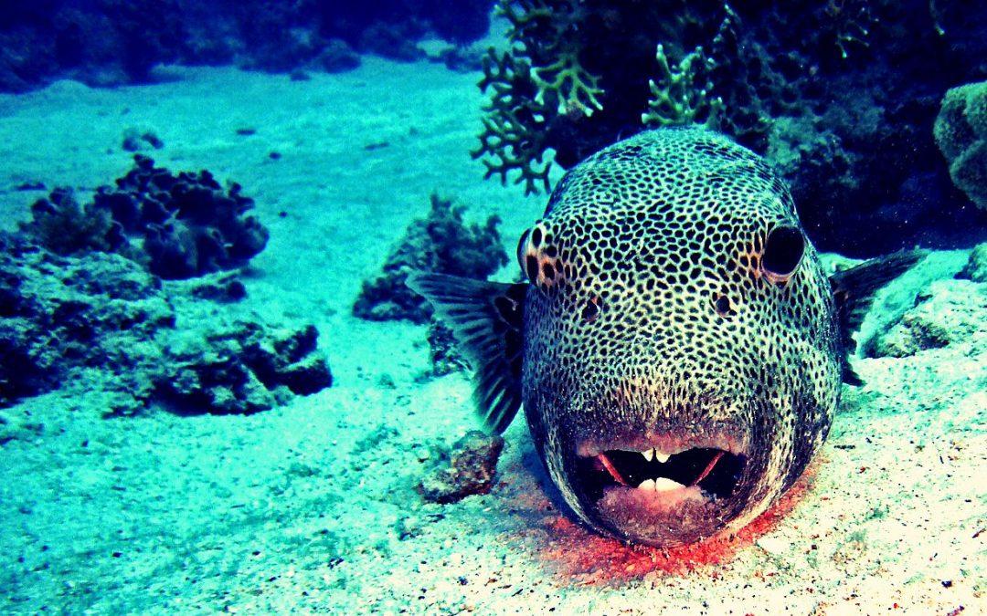 Grube ryby w morzu płotek – rzecz o ekspertach