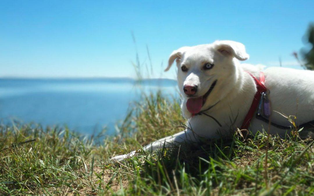 Ile kosztuje utrzymanie psa, co trzeba wymieniać i dokupować? [aktualizacja]