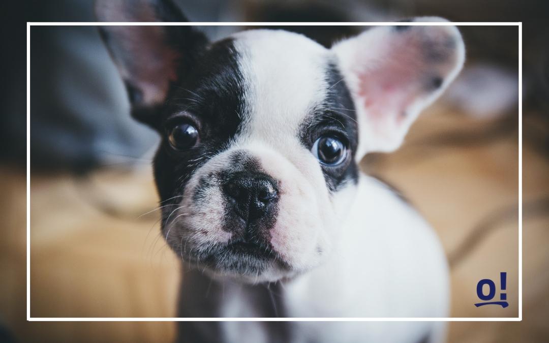 Psi biznes – 5 pomysłów na biznes związany z psami